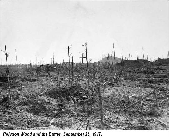 1917 polygon Wood